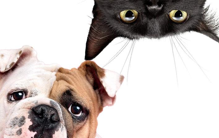 Como criar cães e gatos juntos? | Elite Moda Pet